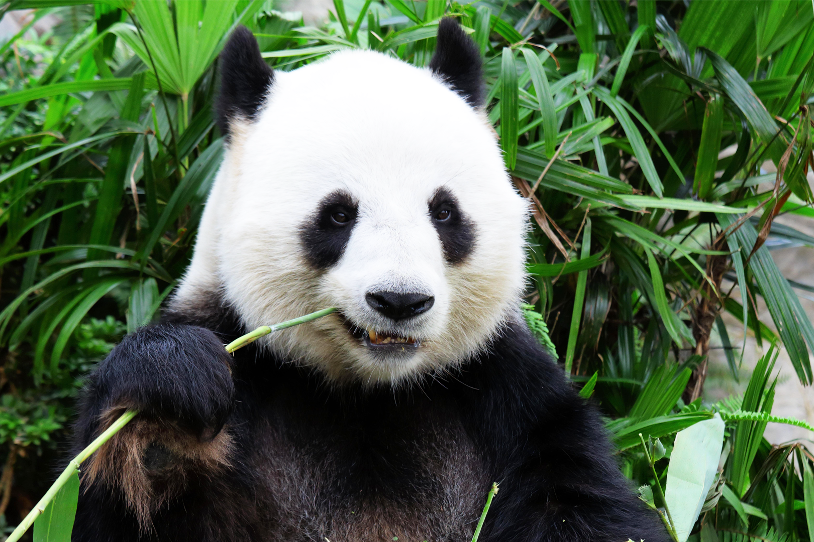 PANDA lead qualification for sales leads